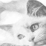 3 herramientas online gratuitas para convertir sus fotos en bocetos
