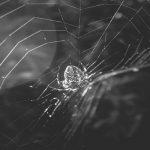 Cómo acceder y navegar por la Dark Web