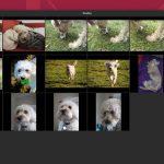 Cómo organizar y compartir sus fotos con Gnome Photos