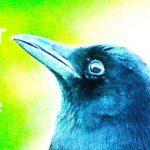Añadir efectos de imagen a la vista previa en OS X